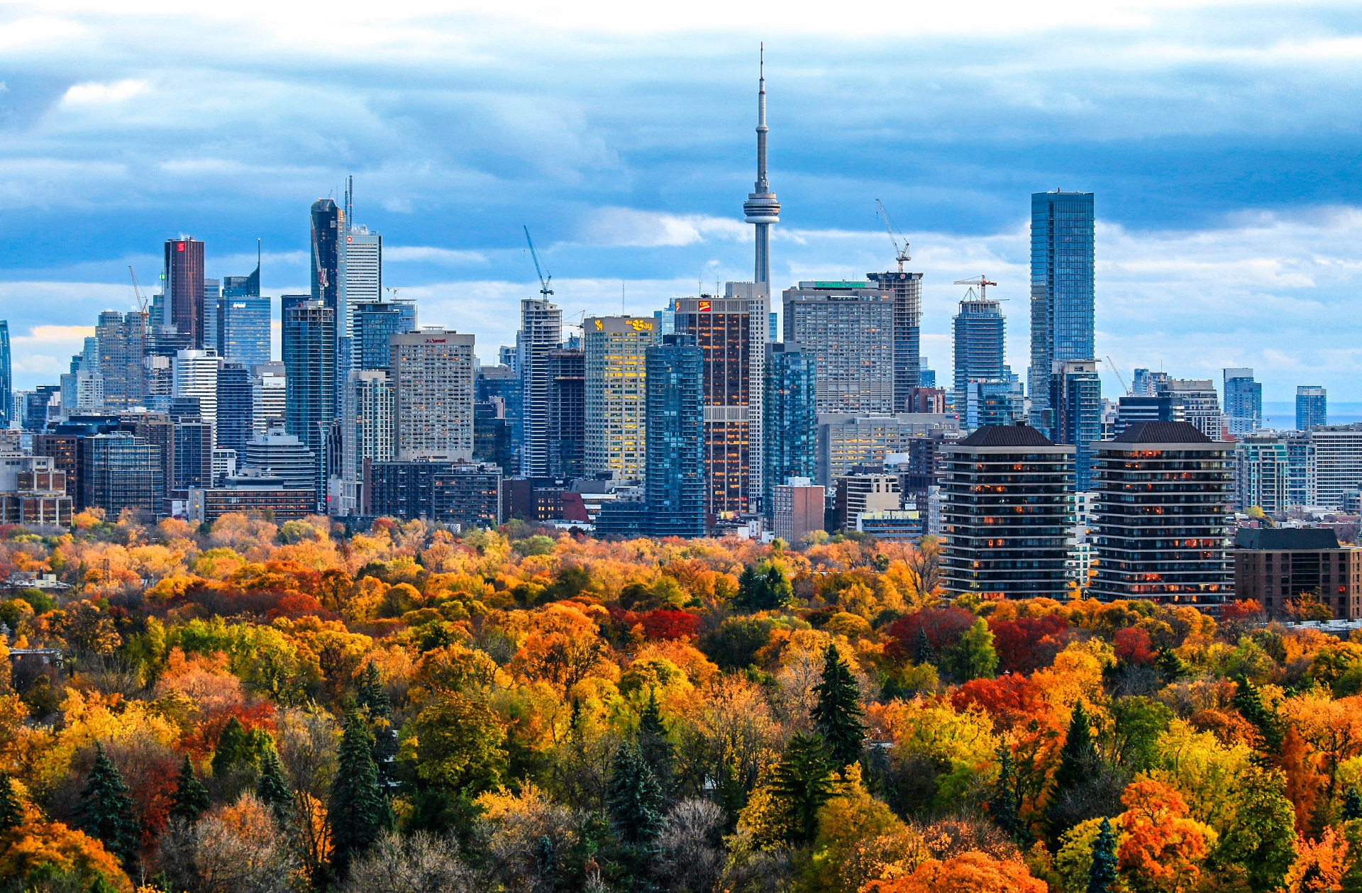 Toronto downtown and midtown with fall colors of trees in foreground